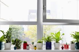 lighting for houseplants. The-sill-houseplants-how-much-sunlight-plants Lighting For Houseplants