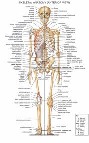 Human Body Anatomical Chart Muscular System Campus Knowledge Biology Classroom Wall Painting Fabric Poster32x24 17x13 06 Canada 2019 From Kaka1688