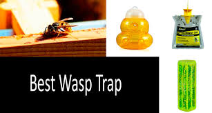 Top 3 Wasp Traps Best Yellow Jacket Traps Detailed Review