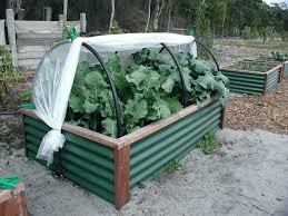 corrugated metal raised garden beds. Corrugated Garden Bed Metal Raised Beds Galvanized Sheet . S