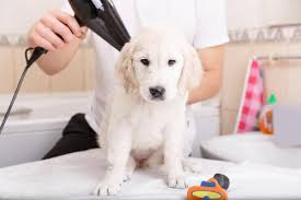like dogs newborn puppies can also get infested by fleas they mostly get them from the mother dog the poor thing suffers a lot due to severe