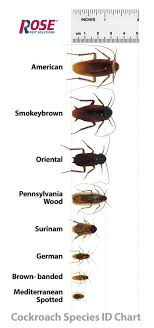 Bug Id Chart Types Of Cockroaches In Michigan Ohio And Indiana