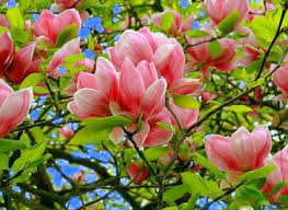 Времена года Весна обои на рабочий стол бесплатно  Обои Времена года Весна Цветущее дерево
