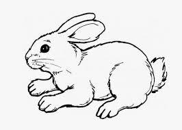 Cute Bunny Coloring Pages Coloringdaypics