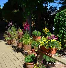 containers for gardening. container gardening book review \u0026 giveaway: \u201cgetting potted in the desert\u201d containers for