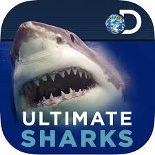 ultimate sharks discovery kids ultimate sharks