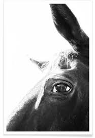 Cheap Horse Posters Buy Horse Art Prints And Posters Online Juniqe
