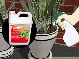 image titled remove ants from potted plants step 1