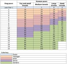 Dog Age Chart By Weight Dog Years To Human Years Calculation Importance Ways To