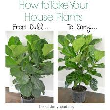 how to make your house plants shine