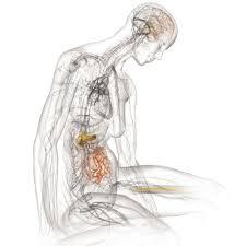 Bryan Christie Design Anatomical Illustration Bryan Christie