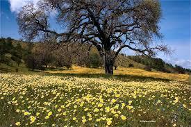 great display of wildflowers on s creek road 2010