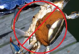 Crabbing Rules And Regulations Crabbing Hq