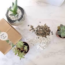 succulent terrarium diy gift kit