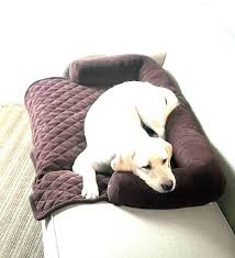 pet covers for leather sofa cover couch dogs furniture sofas best pet covers for leather sofa