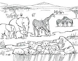 Animal Coloring Pages For Adults Printable Animal Coloring Pages For