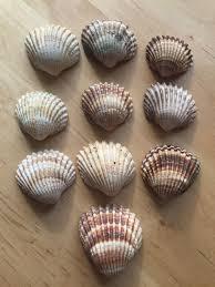 Bulk Starfish Decorations Bulk Seashells Etsy