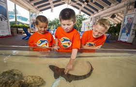 summer camp at seaworld is fun and exciting