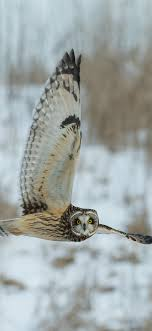 If you're looking for the best owl wallpaper then wallpapertag is the place to be. Best Owl Iphone X Wallpapers Hd 2020 Ilikewallpaper