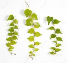 19 Best Climbing Plants For Pergolas And Trellises  Gardens Climbing Plant
