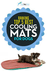 the best cooling mat for dogs