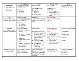 Biological Macromolecules Chart Macromolecules Review Chart With Answers