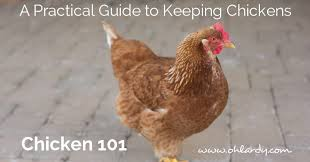 How To Keep Chickens In A City 15 Steps With Pictures  WikiHowHow To Keep Backyard Chickens