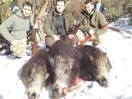 big game gallery in caccia in wild boar