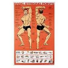 Pressure Point Chart Martial Arts Basic Striking Points Poster