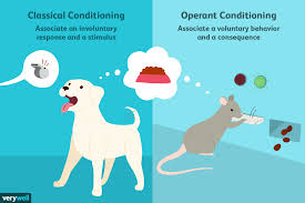Classical Conditioning In The Classroom Differences Between Classical Vs Operant Conditioning