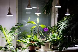 House Plant Led Grow Light Let It Be Light Led Grow Lights Led And Cfl Lamps For