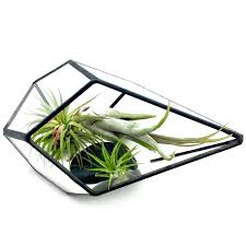 Air Plant Terrarium Kit - Geometric