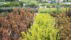 with some planning and some research your garden could be a cascade of color and interest all season long gale s