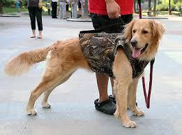 Rigem Right Waterfowl Bloodline Elite Dog Vest Optifade