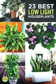 lighting for houseplants. Low Lighting For Houseplants