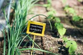 7 easy steps to start vegetable gardening in idaho