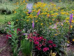 best garden plants. Delighful Best Pollinator Plants Garden Design Calimesa CA And Best Plants