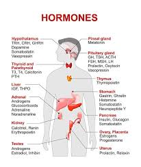 Examples Of Hormones And The Location Of Production Charts