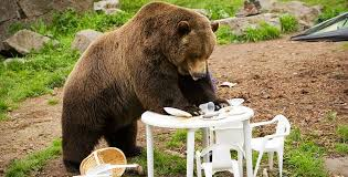 Image result for 野生のクマも出没