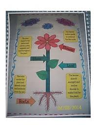 Parts Of A Plant Anchor Chart