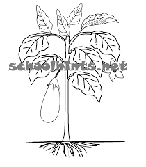3d3014588aedc512f0d716e4cab0c3a6 a plant has parts that help it grow a plant has roots, stem on structure of flower worksheet