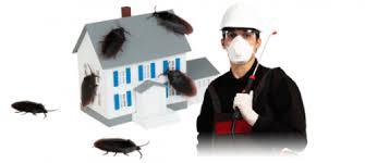 رش حشرات وتطهير المنازل بالمدينه