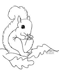 Squirrel Coloring Pages For Preschool Squirrel Coloring Page