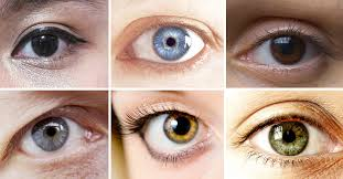 Hazel Eye Chart Why Eyes Have Different Colors A Science Based Look