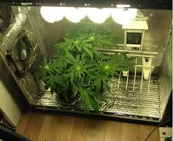 indoor gardening supplies. Worldwide Indoor Marijuana Grow Guide | The Best And Easy Way Screen Shot 2015-02-20 At 3.14.52 PM Gardening Supplies
