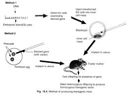 Transgenic Animals Methods Of Producing Transgenic Mouse With Diagram