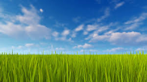 Simple natural background with closeup of fresh green grass field