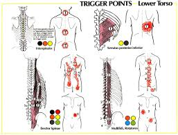 Pain Referral Patterns Inspiration Trigger Point Referral Patterns Balance In Motion Bodywork