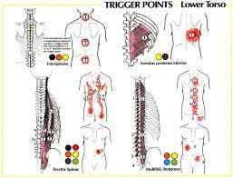 Pain Referral Patterns Inspiration Trigger Point Referral Patterns Balance In Motion Bodywork