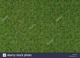 wild grass texture. High Resolution Of Wild Grass Texture - 3D Rendering